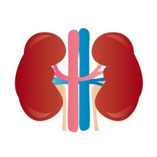 「腎」と「腎臓」の概念は違います。